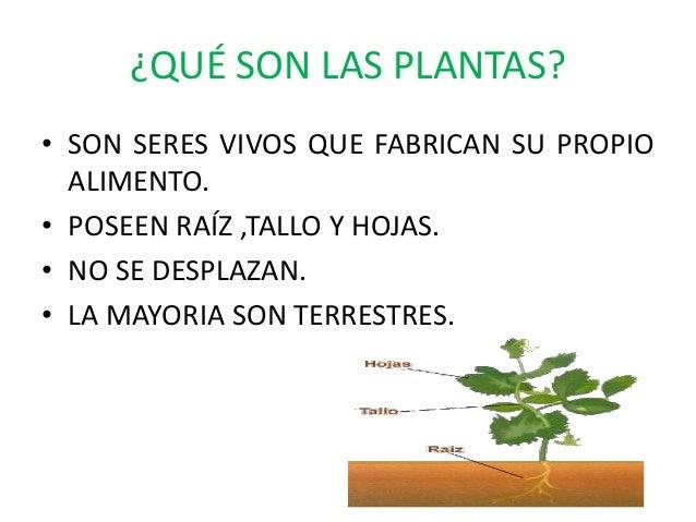 Las plantas y sus caracteristicas for Caracteristicas de las plantas ornamentales