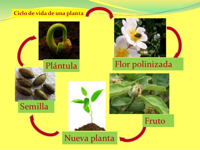 las-plantas-4-638.jpg?cb= ...