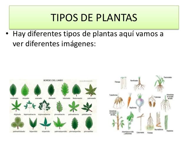 tipos de plantas hay diferentes tipos de plantas aquí vamos
