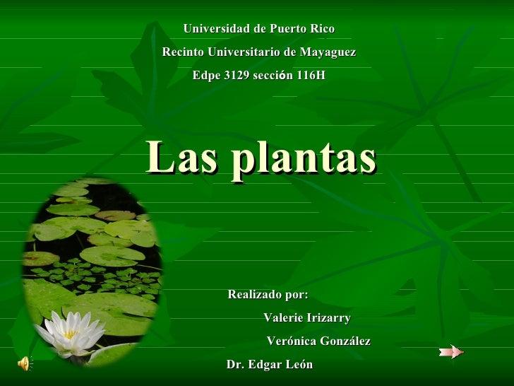 Las plantas Realizado por:  Valerie Irizarry  Verónica González Dr. Edgar León Universidad de Puerto Rico Recinto Universi...