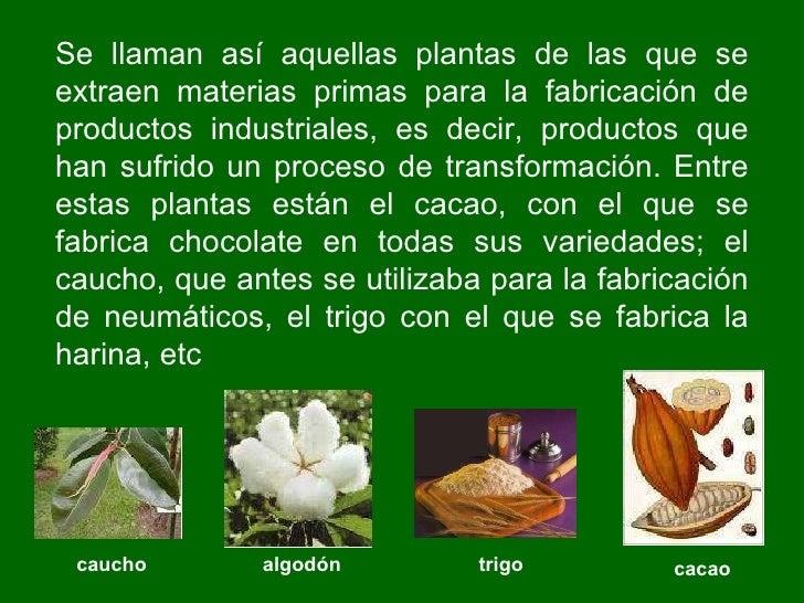 Las plantas primaria ie n 1198 la ribera aula de for Informacion de plantas ornamentales