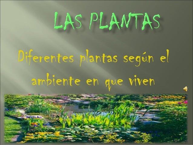 Diferentes plantas según el   ambiente en que viven