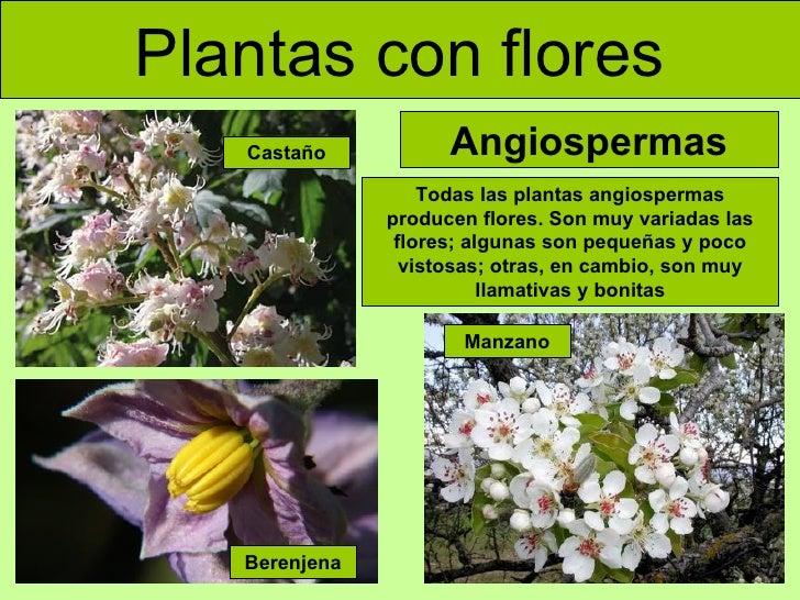 Cómo se clasifican las plantas según sus hojas?