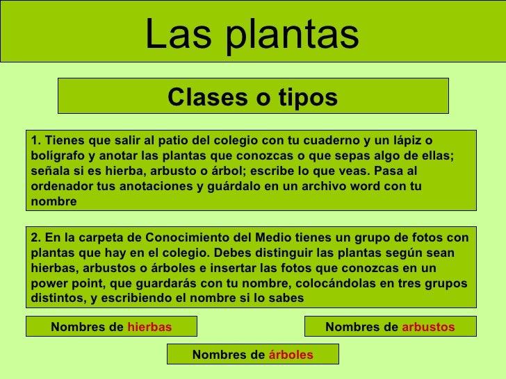 Las plantas adaptada for Cuales son los tipos de plantas