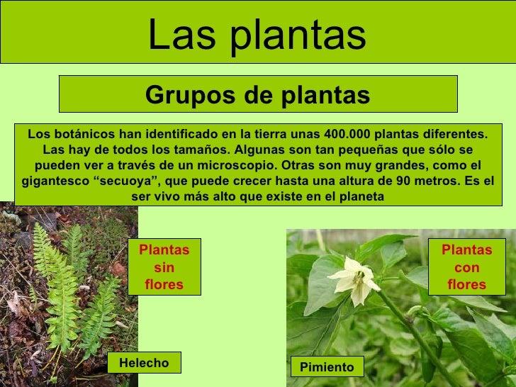 las plantas grupos de plantas plantas sin flores plantas con