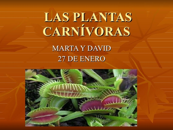 Plantas Carnivoras Related Keywords & Suggestions  Plantas Carnivoras