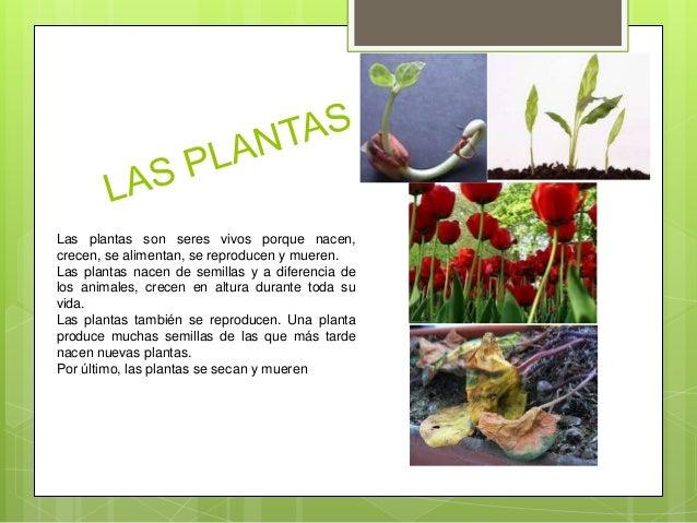 Que son las plantas las plantas para primaria for Que son la plantas ornamentales