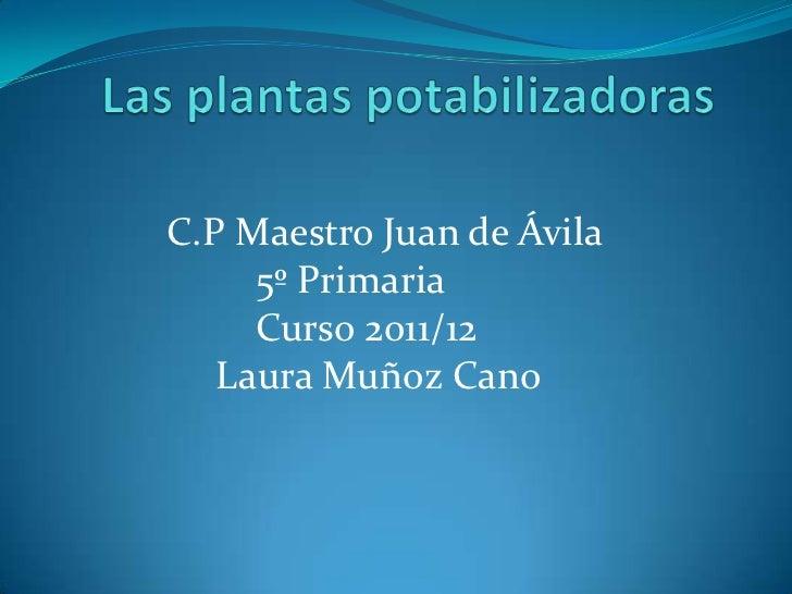 C.P Maestro Juan de Ávila     5º Primaria     Curso 2011/12   Laura Muñoz Cano