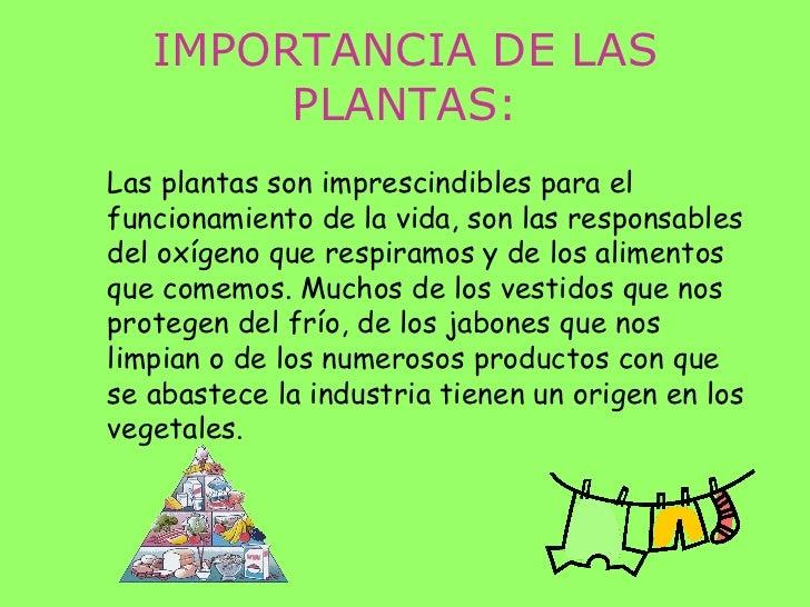 Las plantas power for Importancia de los viveros forestales