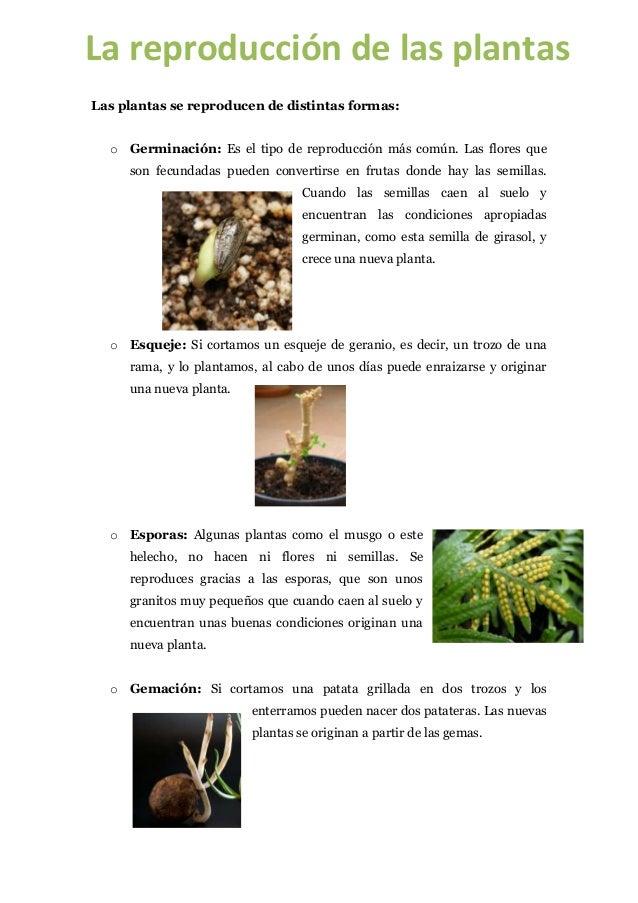 La reproducción de las plantasLas plantas se reproducen de distintas formas:  o Germinación: Es el tipo de reproducción má...