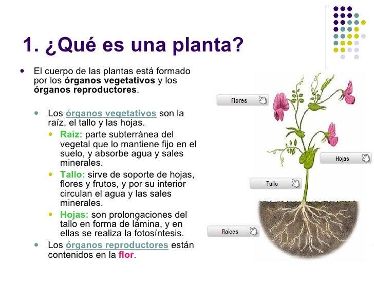 Las plantas y los hongos for Que es un vivero de plantas ornamentales