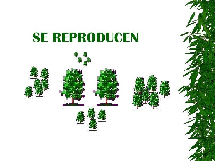 se reproducen 6 mueren 7 pero no se desplazan 8