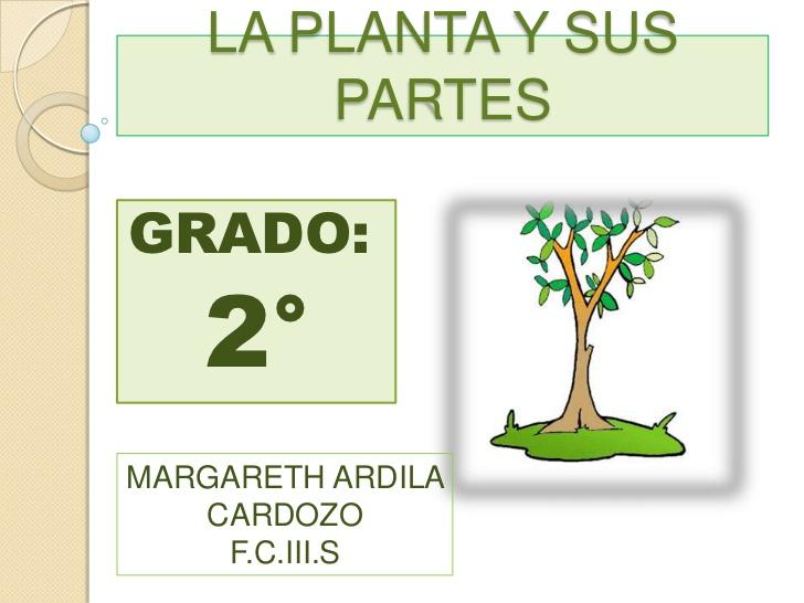 Las plantas y sus partes