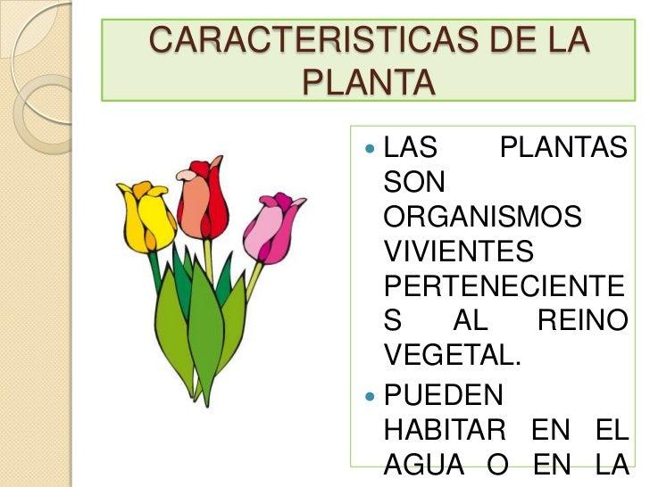 caracteristicas de la planta las plantas son organismos vivientes