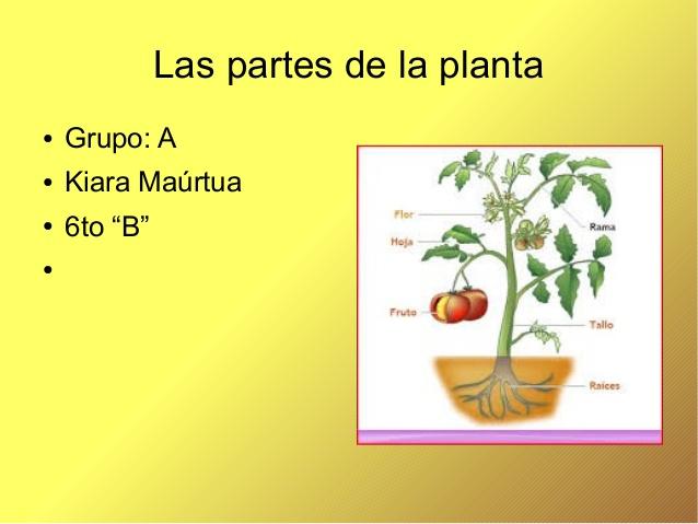 Las plantas y sus partes kiara