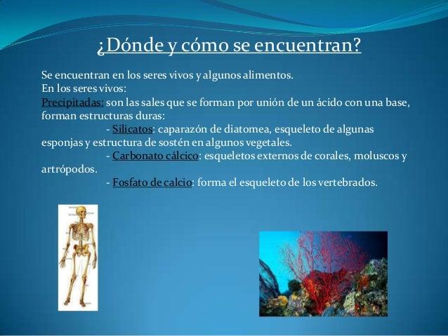 Las sales minerales for En k parte del cuerpo estan los rinones