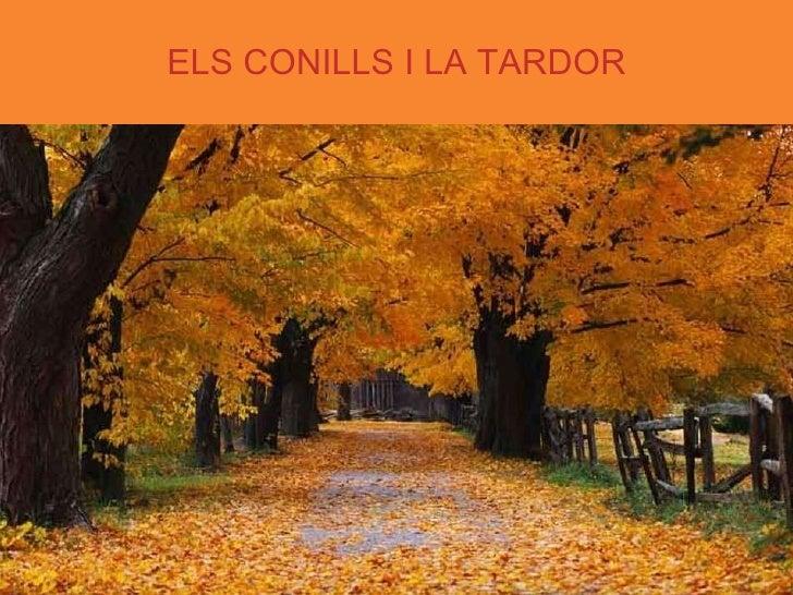 ELS CONILLS I LA TARDOR