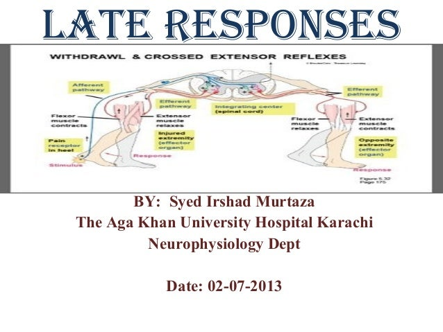 Late Responses (F-wave and H.Reflex)