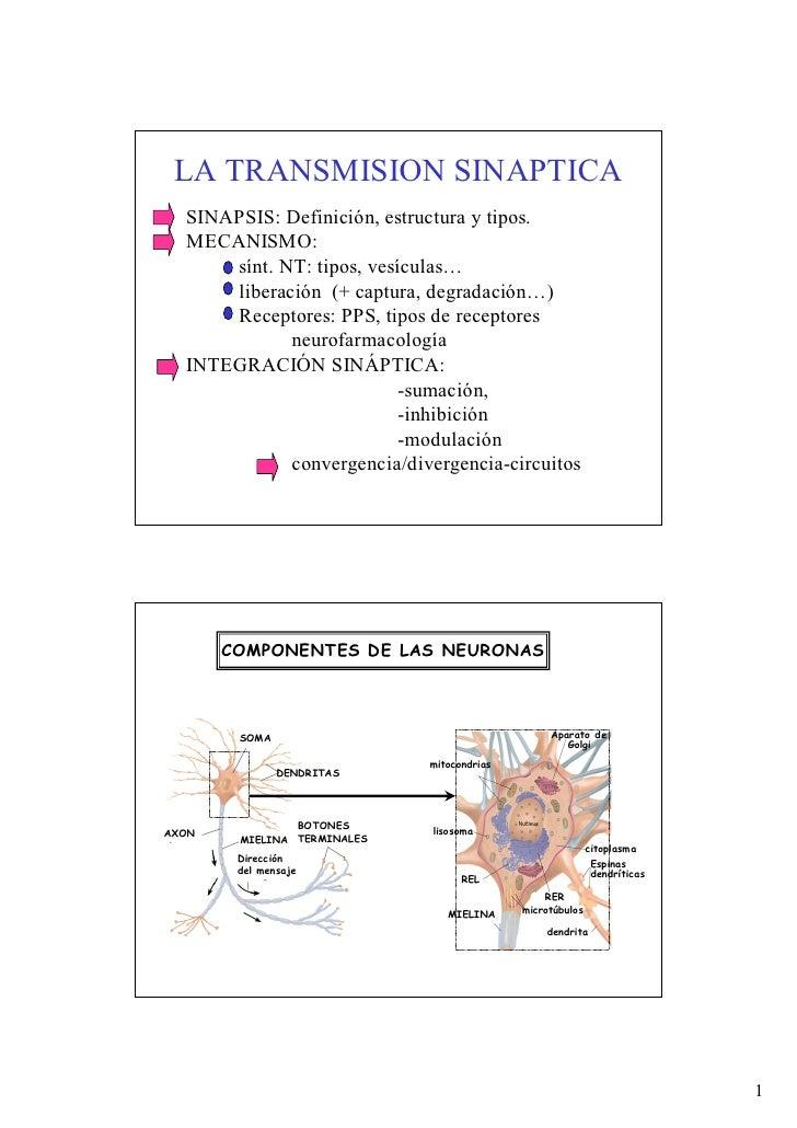 LA TRANSMISION SINAPTICA  SINAPSIS: Definición, estructura y tipos.  MECANISMO:      sínt. NT: tipos, vesículas…      libe...