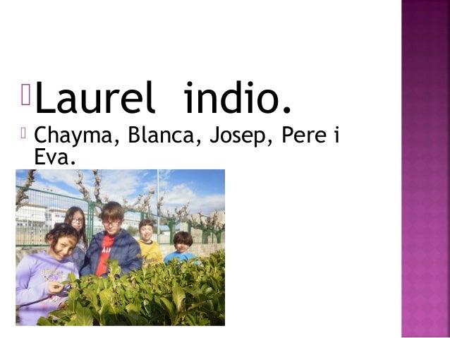 Laurel indio.  Chayma, Blanca, Josep, Pere i Eva.
