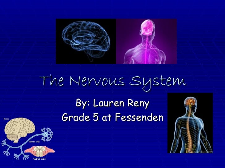 The Nervous System By: Lauren Reny Grade 5 at Fessenden