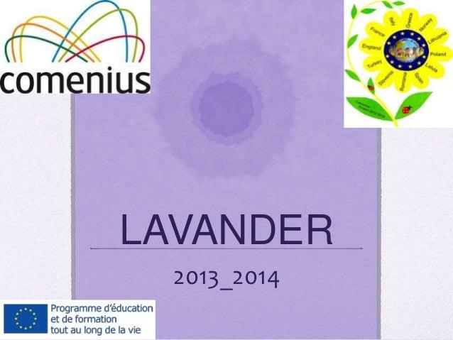 LAVANDER 2013_2014