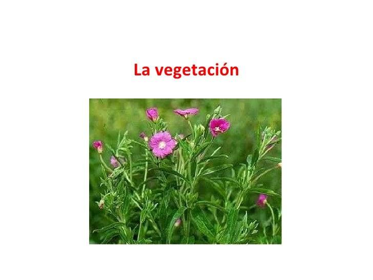 La vegetación