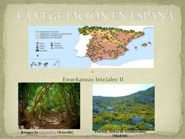 Enseñanzas Iniciales II Bosque de Laurisilva (Tenerife) Piornal, Sierra de Guadarrama (Madrid)
