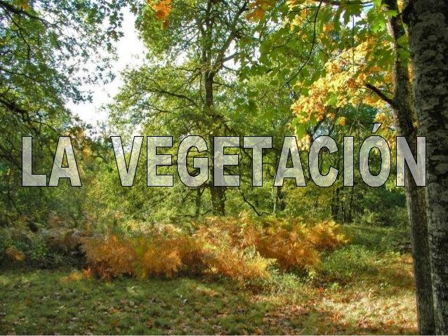 VEGETACIÓN DE LA MONTAÑA Zona CANTABRO - ATLÁNTICA Zona PIRENAICA Temperaturas suaves Abundantes lluvias BOSQUE CADUCIFOLI...