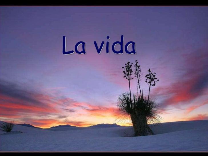 Lavida1 (2)