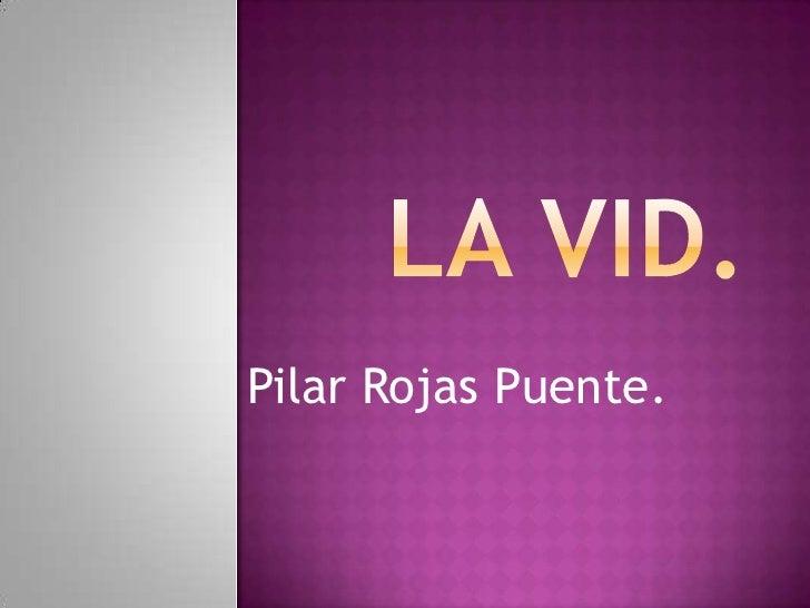 LA VID.<br />Pilar Rojas Puente.<br />