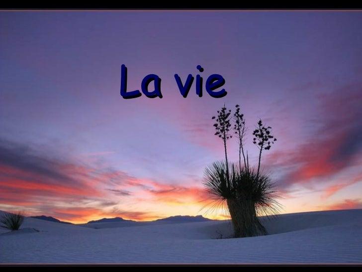 Lavie H
