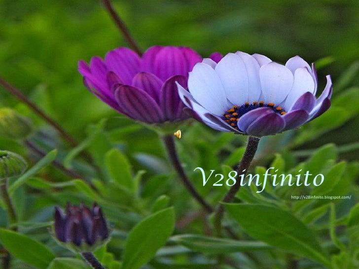 V28infinito<br />http://v28infinito.blogspot.com/ <br />