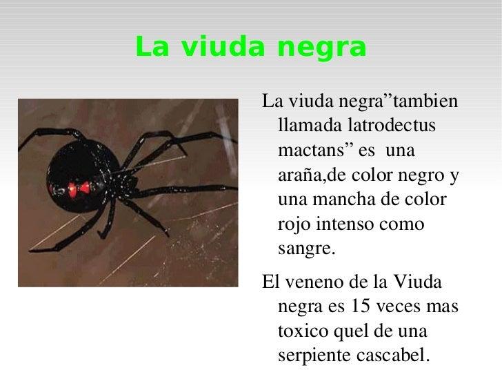 "La viuda negra La viuda negra""tambien llamada latrodectus mactans"" es  una araña,de color negro y una mancha de color rojo..."