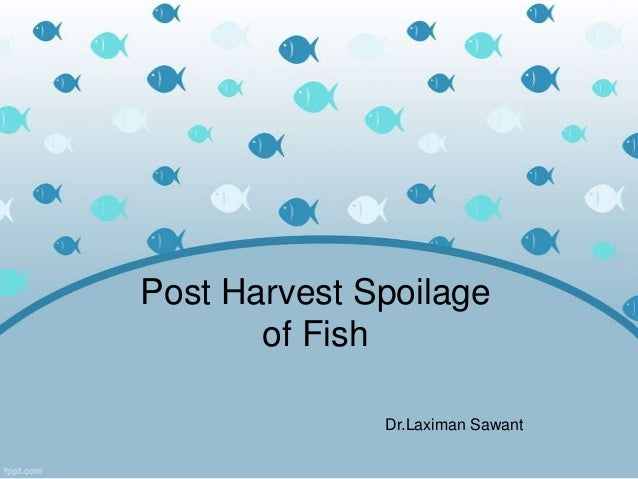 Post Harvest Spoilage       of Fish              Dr.Laximan Sawant