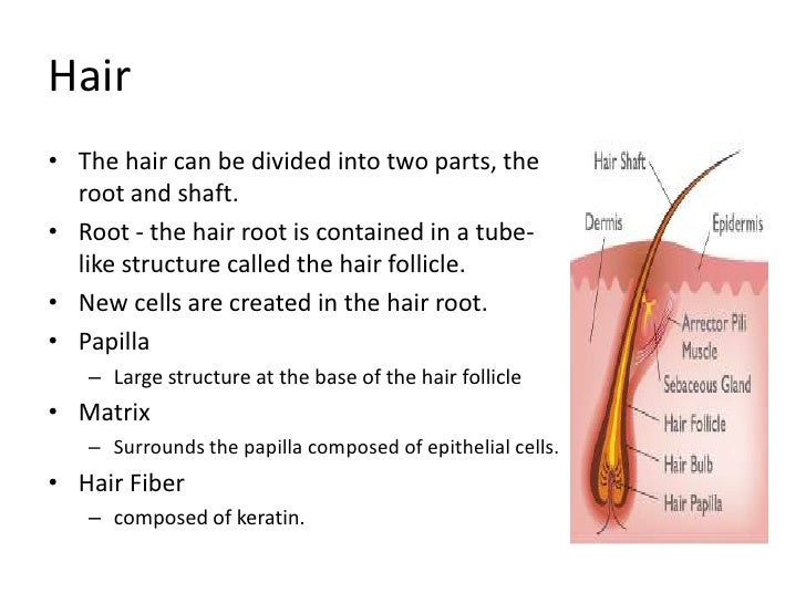 a hair grows in a diagonal epithelial tube called a Eniwetok corporation--or whatever it is or may be called 11) i have previously   (through a glass tube inserted into the tra- chea) 2'''pu0, doses of  alveolar  epithelial hyperplasia and metaplasia  skin was irradiated with the hair in the  grow- ing phase, ie  the diagonal lines are loci of constant.