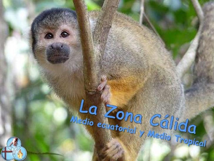 Esta foto es de la selva Amazónica y su rio (BOSQUE ECUATORIAL)                               Medio Ecuatorial