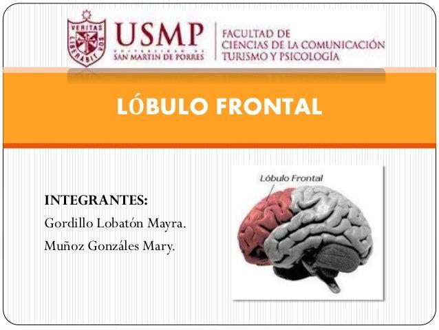 INTEGRANTES: Gordillo Lobatón Mayra. Muñoz Gonzáles Mary. LÓBULO FRONTAL
