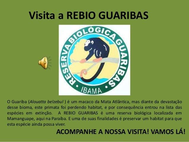 Visita a REBIO GUARIBAS O Guariba (Alouatta belzebul ) é um macaco da Mata Atlântica, mas diante da devastação desse bioma...