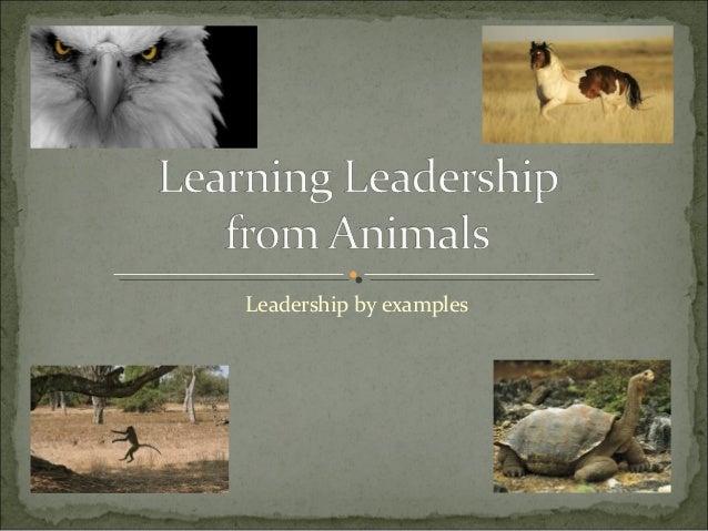 Leadership from animal kingdom