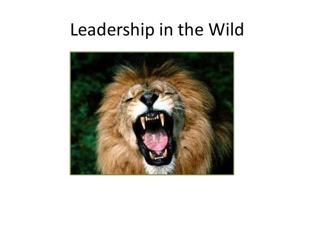 Leadership in the Wild