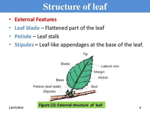 Plant physiology definition