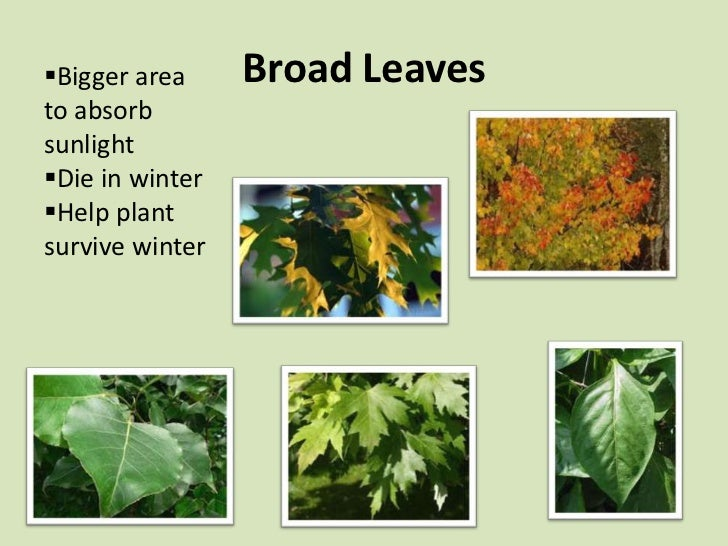 Leaf Adaptations on Plant Structure And Function Worksheet