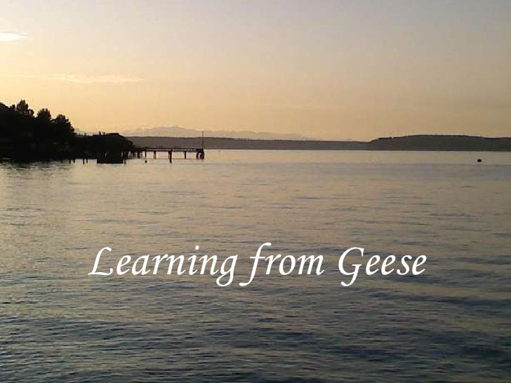 Learning from Geese