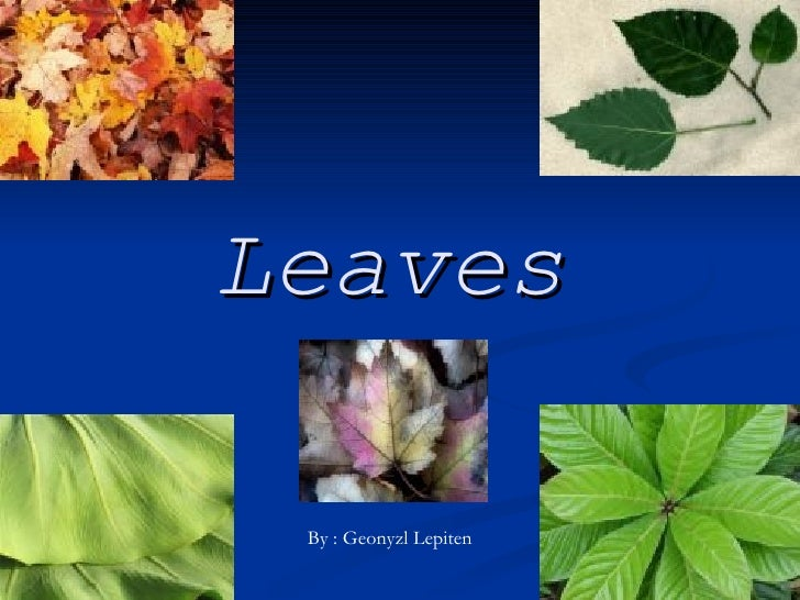 Leaves By : Geonyzl Lepiten