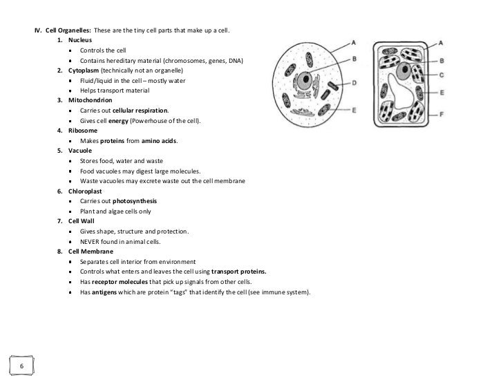 Cell Organelles Worksheet Answer Key Biology 9374474 Virtualdirfo