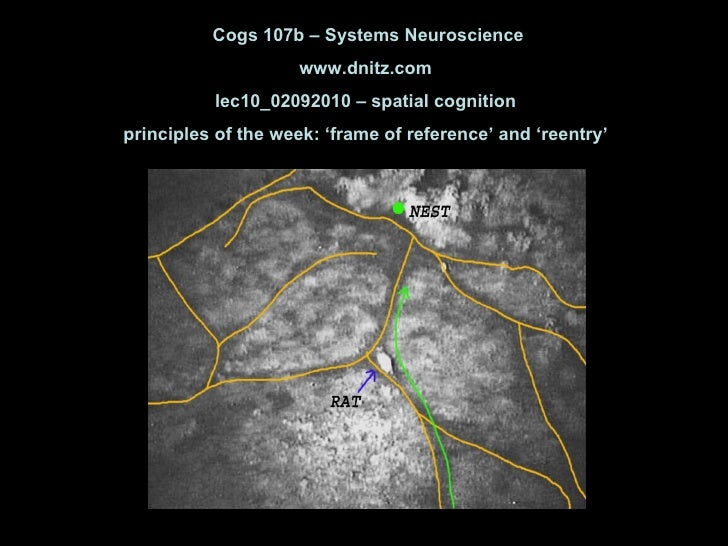 Cogs 107b – Systems Neuroscience www.dnitz.com lec10_02092010 – spatial cognition principles of the week: 'frame of refere...