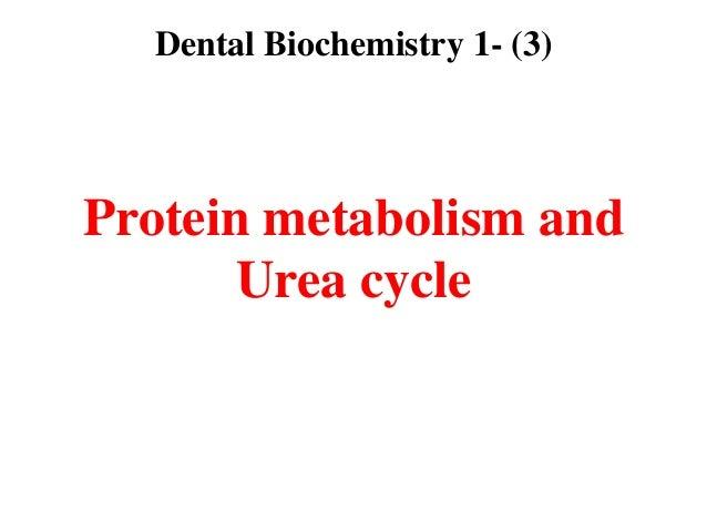 Lec 3  level 3-de(protein metabolism &urea cycle)