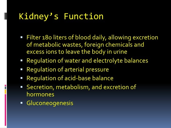 Kidney's Function<br />Filter 180 liters of blood daily, allowing excretion of metabolic wastes, foreign chemicals and exc...