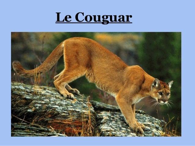 Le Couguar